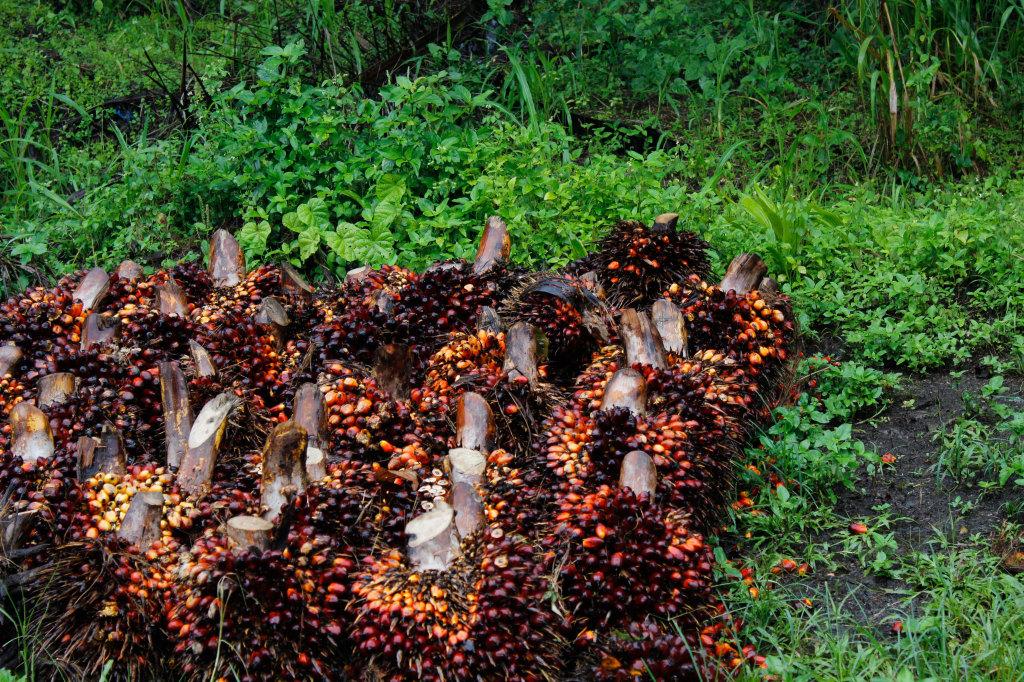 Palm-nut