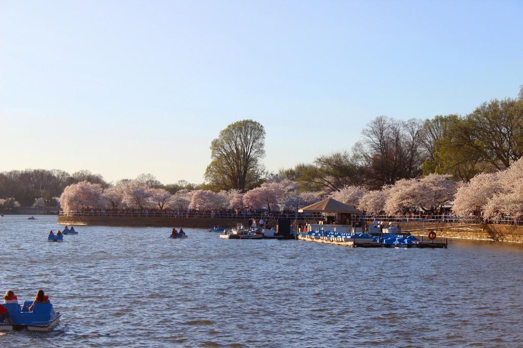 DC-blossoms-3